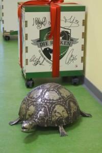 Unsere Schildkröte bewacht den Hauptpreis der Verlosungsaktion.