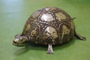 Eine Schildkröte ist das neue Haustier der TECHNOBRAU.